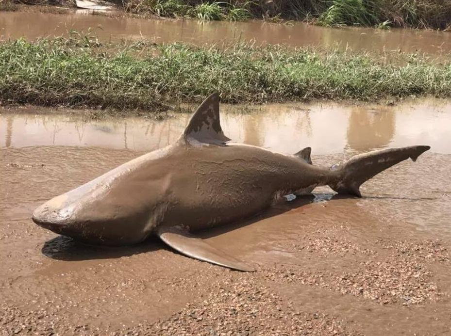 1 2 3 ปลาฉลามขึ้นบก, 1 2 3, ปลาฉลาม, ปลาฉลามขึ้นบก, 456, 456 จิ้งจกควักไส้ , จิ้งจก, I am sherry, จั๊กจี้, หัวใจ