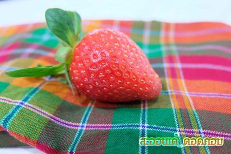 บักสตอเบอรี่, สตอเบอรี่, strawberry, เกาหลี,