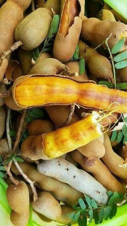 บักขามเหิ่ม (มะขามใกล้สุก), มะขาม, บักขาม, บักขามเหิ่ม, มะขามใกล้สุก, tamarind,