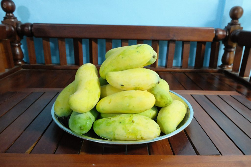 มะม่วง, มะม่วงมหาชนก, ลูกมะม่วง, ผลมะม่วง, ผลไม้, มหาชนก, mango, Mahachanok , Rainbow Mango, ตระกร้า, ตระกร้าใส่มะม่วง, มะม่วงในตระกร้า,